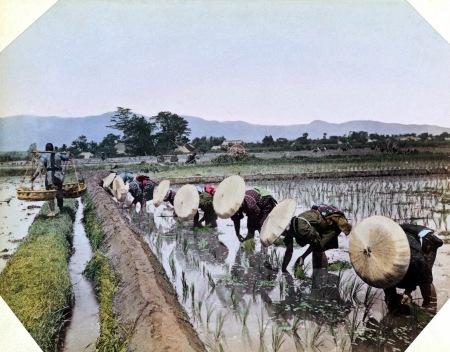 japanesewomenwearingbamboohatsplantingriceca-1895